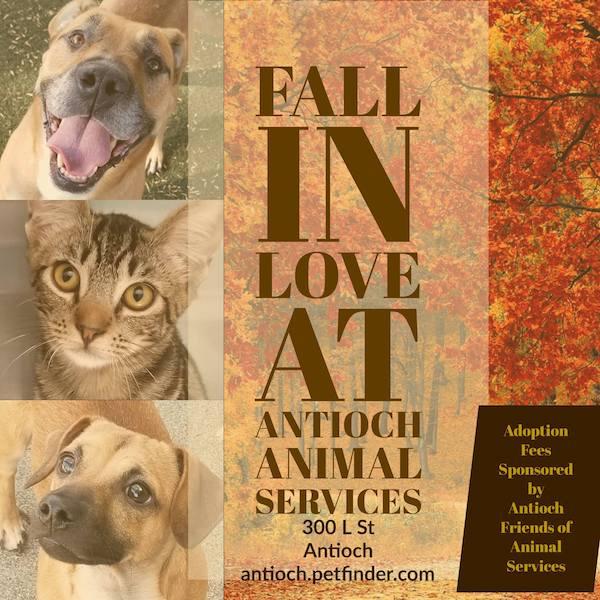 Antioch Animal Services