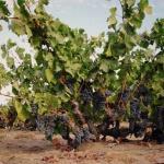 Evangelho Vineyards: The Ancient Vines of Antioch