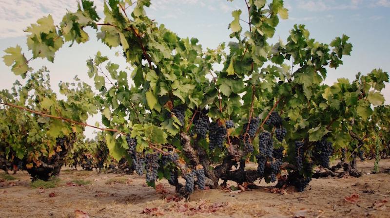 Evangelho Vineyards